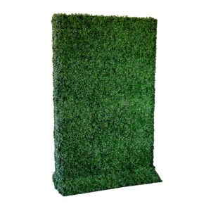 Box Wood Hedge Rental