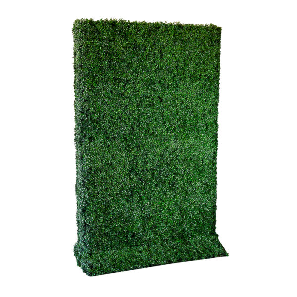 Box Wood Hedge Rental