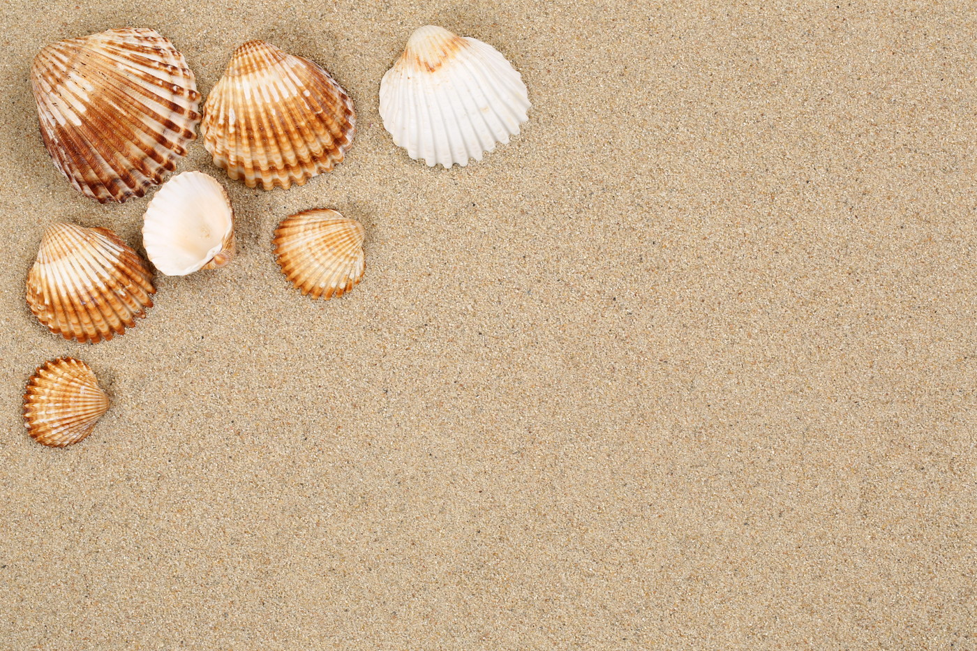 Sea Shells Summer
